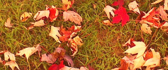 cropped-fall2014_5.jpg
