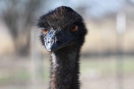 Ostrich-Unsplash_ruth-caron-1122