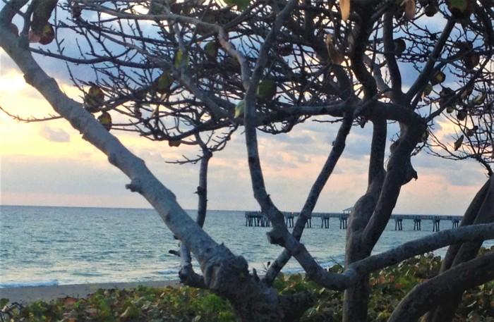 Floridian(3)