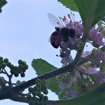 Buzz! Photo by Milly Moss
